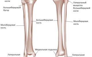 Малая берцовая кость перелом фото
