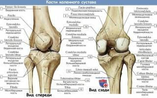 Сумки коленного сустава